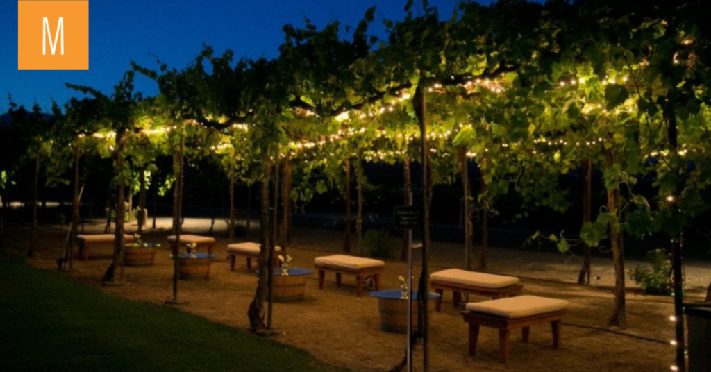 Grape arbor with market lights and Classic Wine Country details