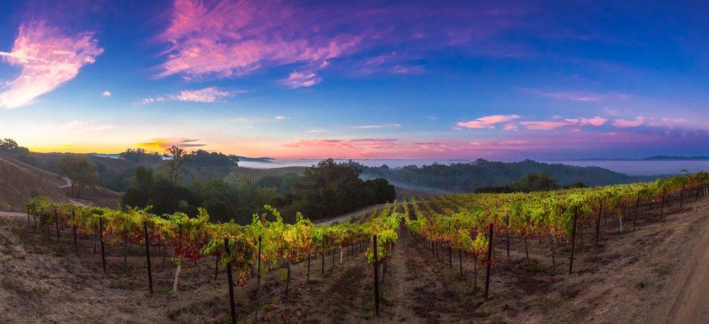 Wine Country Weddings & COVID-19 Virus