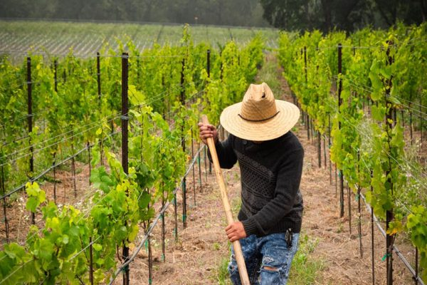 Communicate with clients about vineyard manegement, covid and other relatable topics