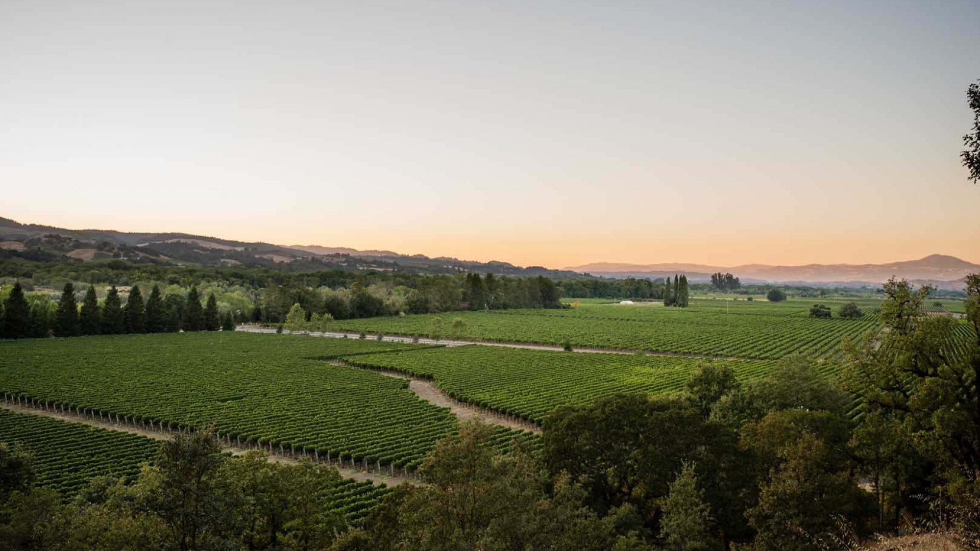 Sunset-Vineyard-Views